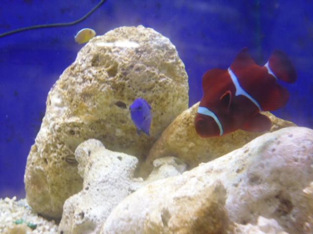 Boutique en ligne de aquatiti l 39 animalerie d 39 arles for Animalerie en ligne poisson